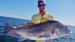 Angler holdng large black drum he just caught in North Florida